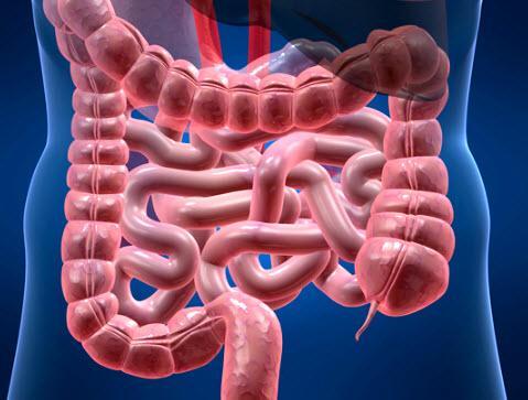 Дисбактериоз кишечника. Симптомы и лечение у взрослых