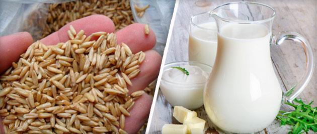 Отвар овса на молоке отлично избавляет от кашля, снимает воспаление и способствует укреплению иммунитета