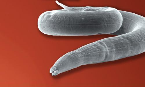 лекарства от глистов и паразитов у взрослых