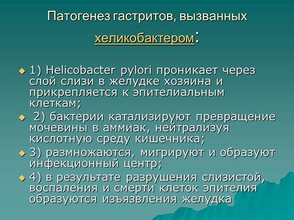 Патогенез гастритов, вызванных хеликобактером