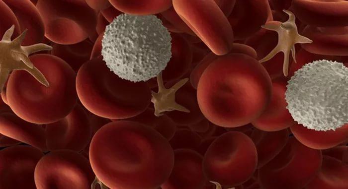 Как поднять тромбоциты в крови