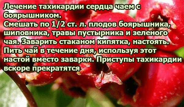 Лечение тахикардии сердца чаем с боярышником