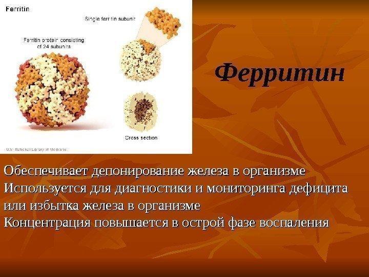 Молекула ферритина