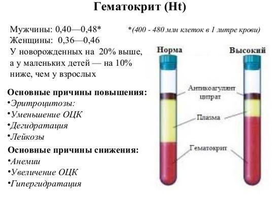Норма гематокрита в крови