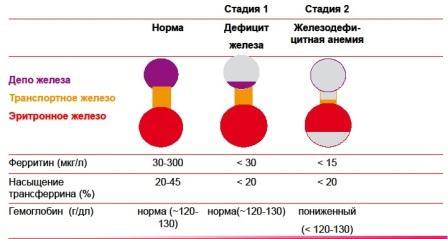 Норма и стадии анемии