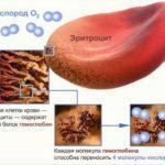Пониженный гемоглобин: симптомы