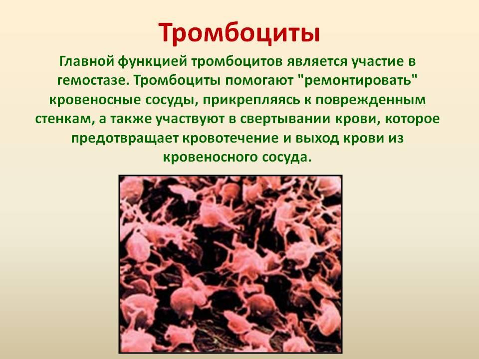 Функция тромбоцитов