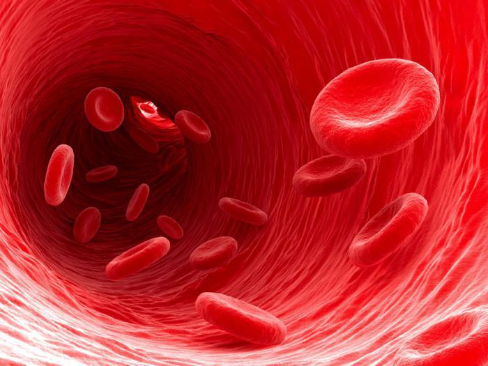 Где разрушаются эритроциты?