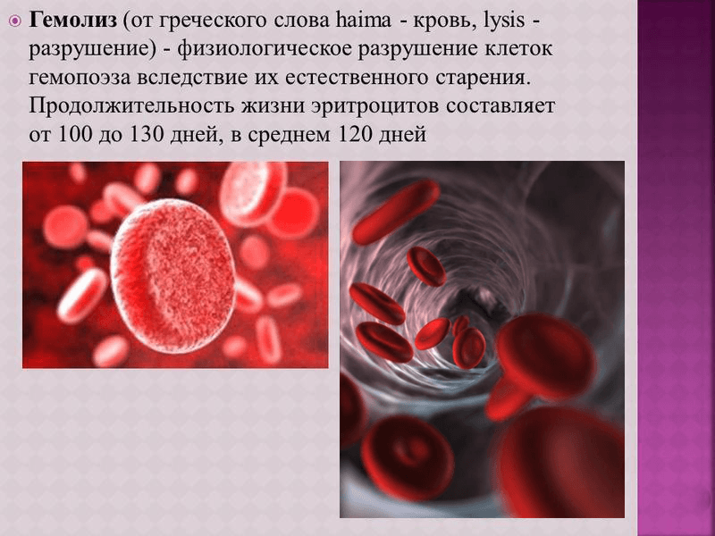 Продолжительность жизни эритроцитов