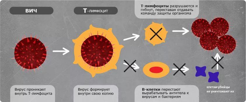 Развитие ВИЧ-инфекции