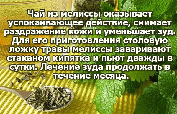 Чай из мелиссы от зуда
