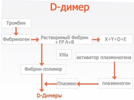 D-димер при беременности
