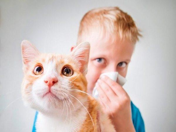 Как проявляется аллергия на кошек у детей?