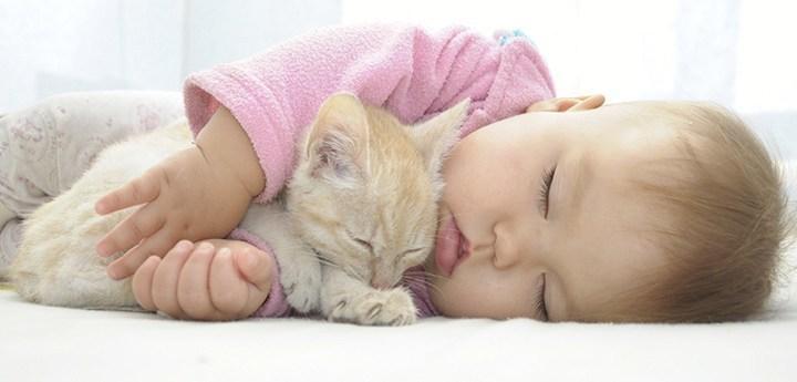 На какой день проявляется аллергия на кошек у детей