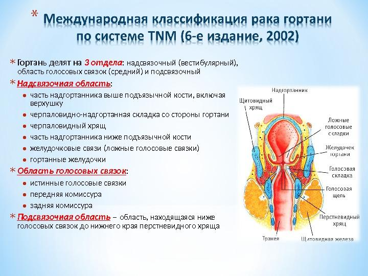 Международная классификация рака гортани