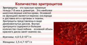 Количество эритроцитов в крови