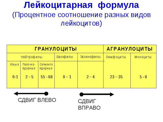 Лейкоцитарная формула. Норма