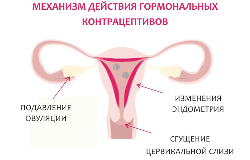 Механизм действия гормональных контрацептивов