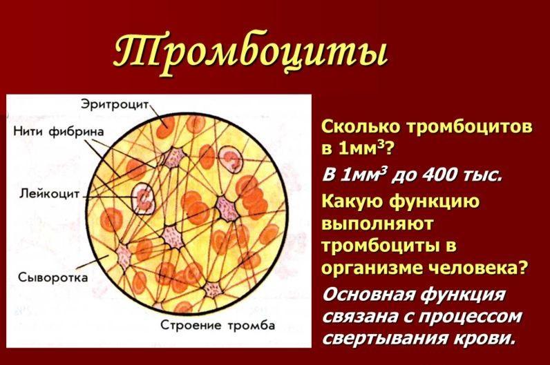 Норма тромбоцитов в крови