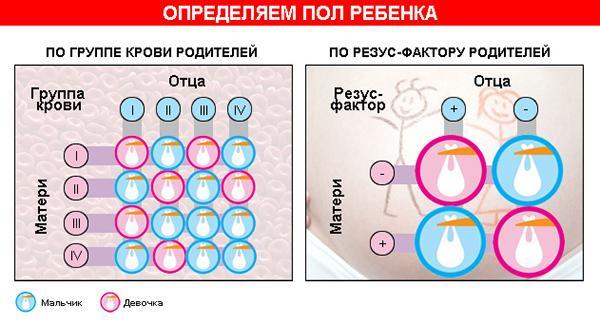 Определение пола ребенка в зависимости от группы крови родителей