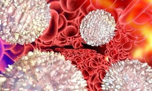 Лейкоцитоз. Почему повышены лейкоциты в крови, норма содержания. Что такое лейкоциты