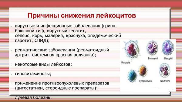 Причины снижения лейкоцитов