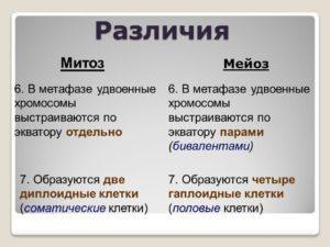 Различиня митоза и меоза. Часть 3