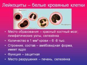 Функции, строение и состав лейкоцитов