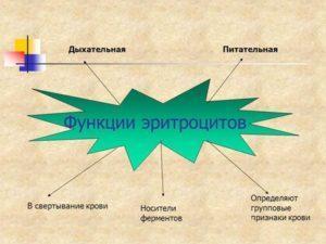 Функции эритроцитов