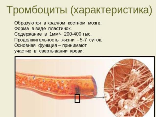 Характеристика тромбоцитов