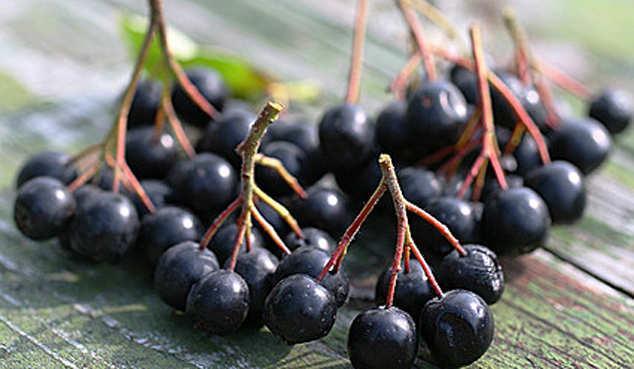 Черноплодная рябина отлично повышает вязкость крови, увеличивая ее ферментный состав