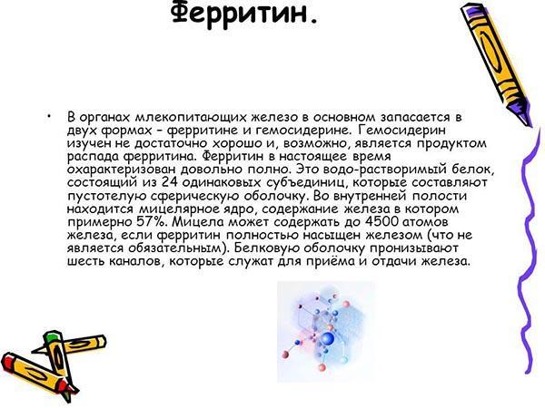 Что такое ферритин
