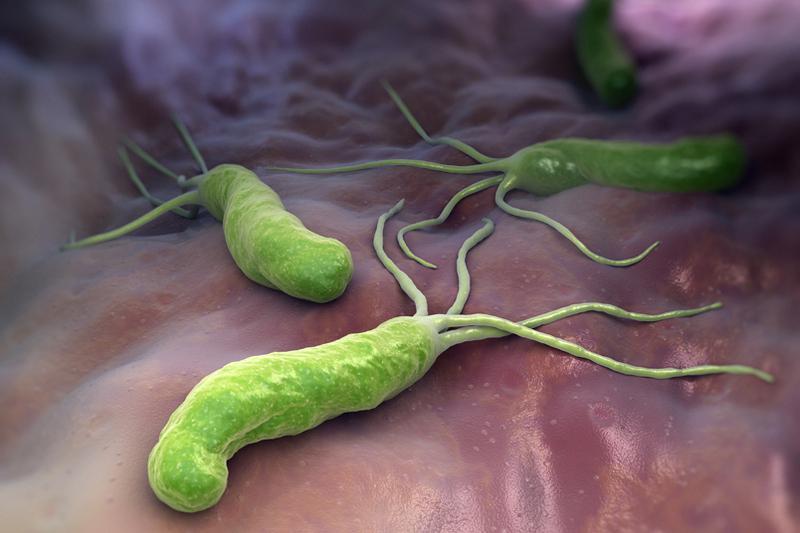 Микроб Helicobacter