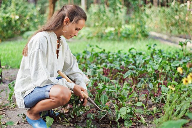 Причиной заболевания аскаридозом является пренебрежение личной гигиеной после контакта с почвой