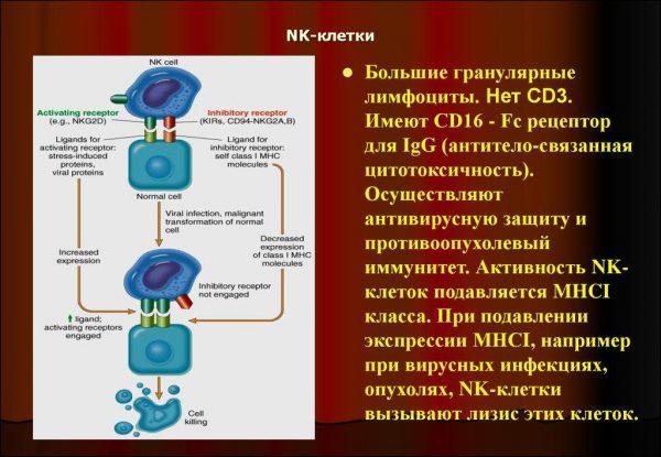 NK-лимфоциты