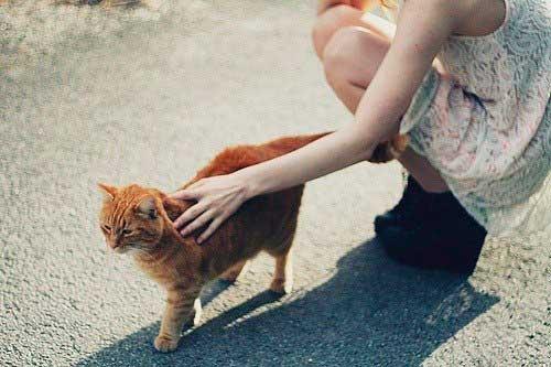 Заразится глистами просто, достаточно погладить бездомное животное во дворе