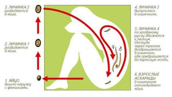 болезни паразитов в организме