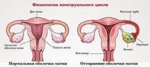 Физиология менструального цикла