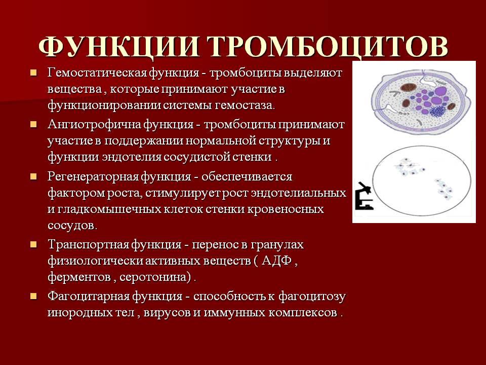 Функции тромбоцитов