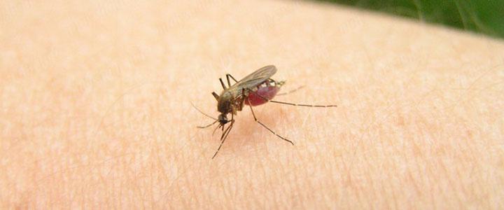 Случаи передачи инфекции через кровососущих насекомых зафиксированы не были