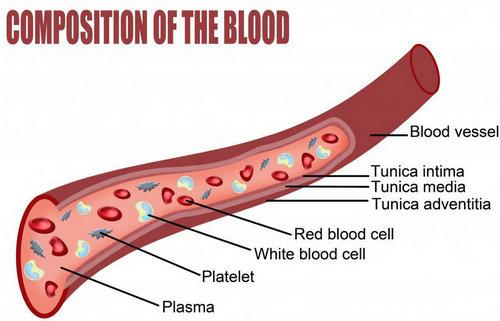 MPV (mean platelet volume)