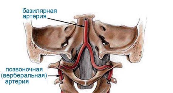 Базилярная и позвоночная артерия