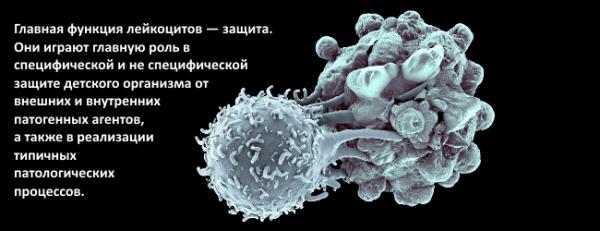 Для чего нужны лейкоциты