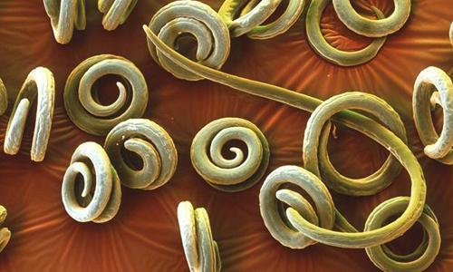 выход паразитов из организма