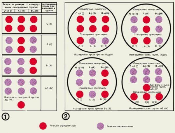 Группа крови и резус фактор – фото