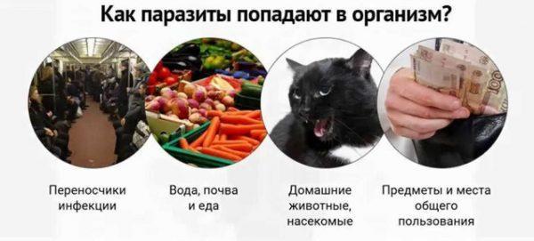 Как паразиты попадают в организм