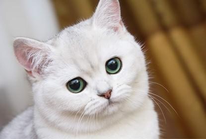 Как проявляется аллергия на кошек у взрослых