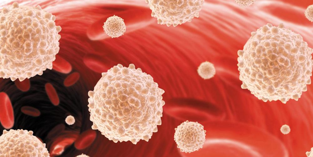 Лейкоциты в крови повышены при беременности