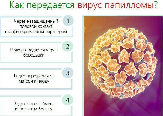 Пути передачи вируса папилломы человека