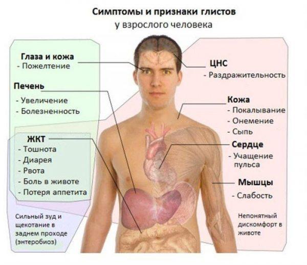 Симптомы глистов у взрослого человека